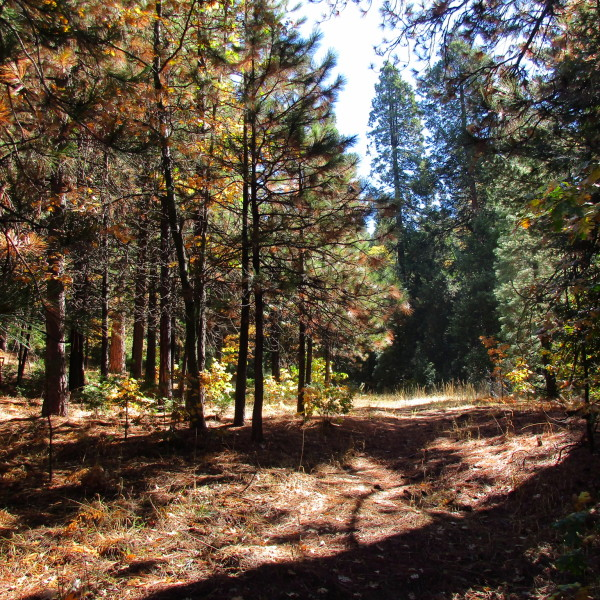 0 Grass Valley Rd~Lot